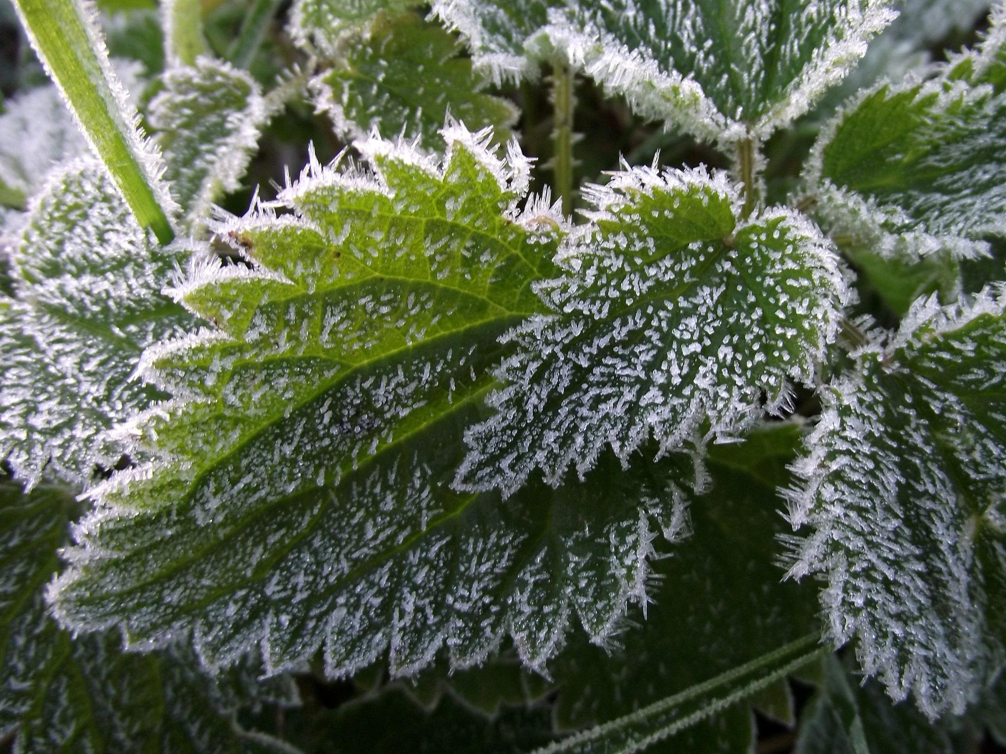 Биологи засняли заморозку воды под действием «бактерий-Саб-Зиро»