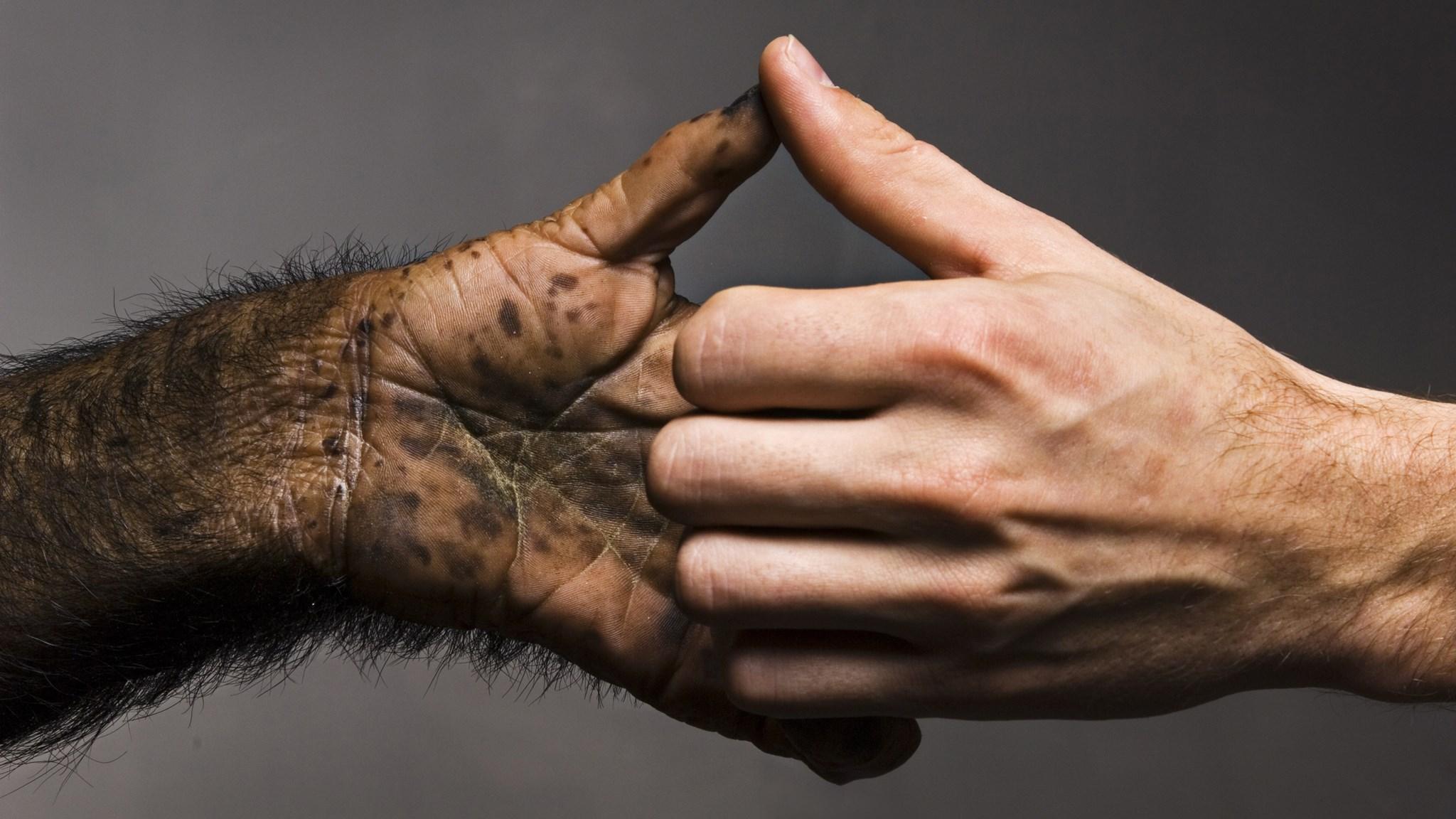 Эволюция человеческих рук и ног, вероятно, происходила одновременно
