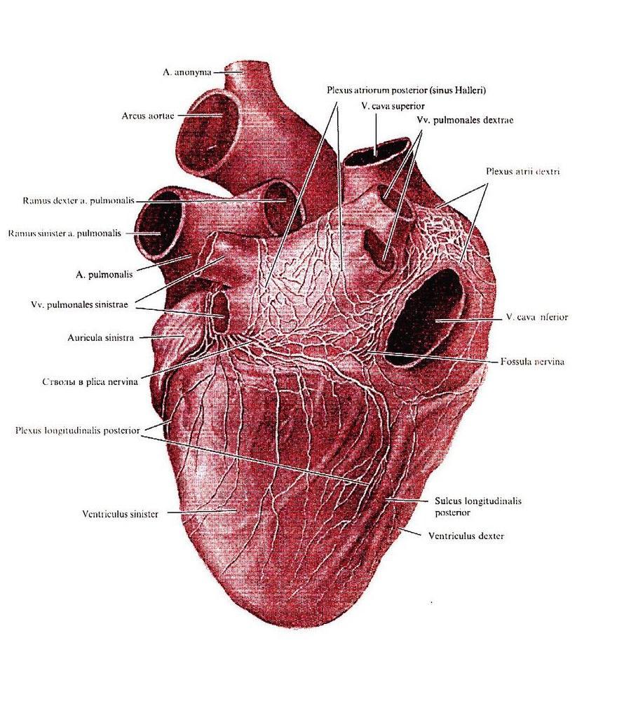 депрессию после инфаркта связали с повышенным риском смерти