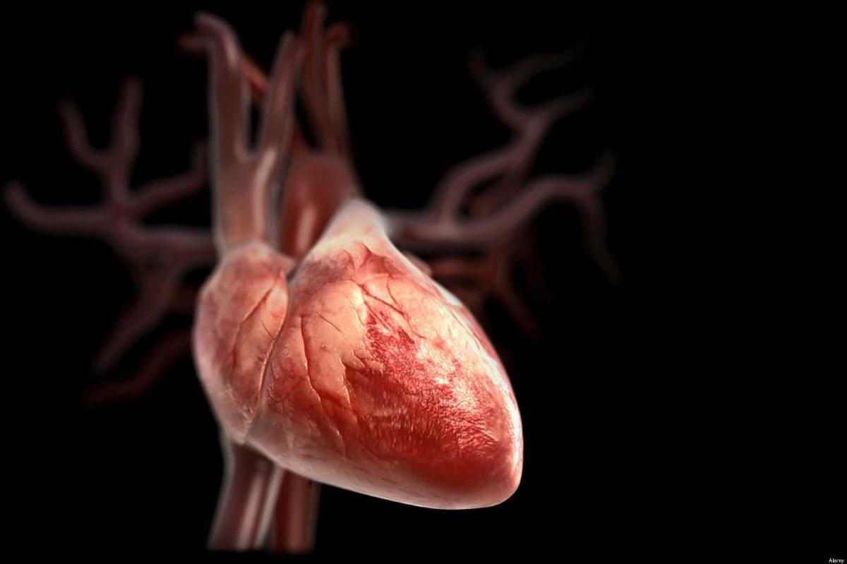 Загрязнение воздуха увеличивает размер сердца