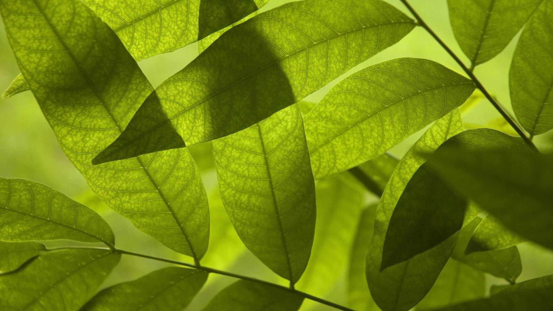 Повышение температуры заставило растения поглощать больше углекислого газа