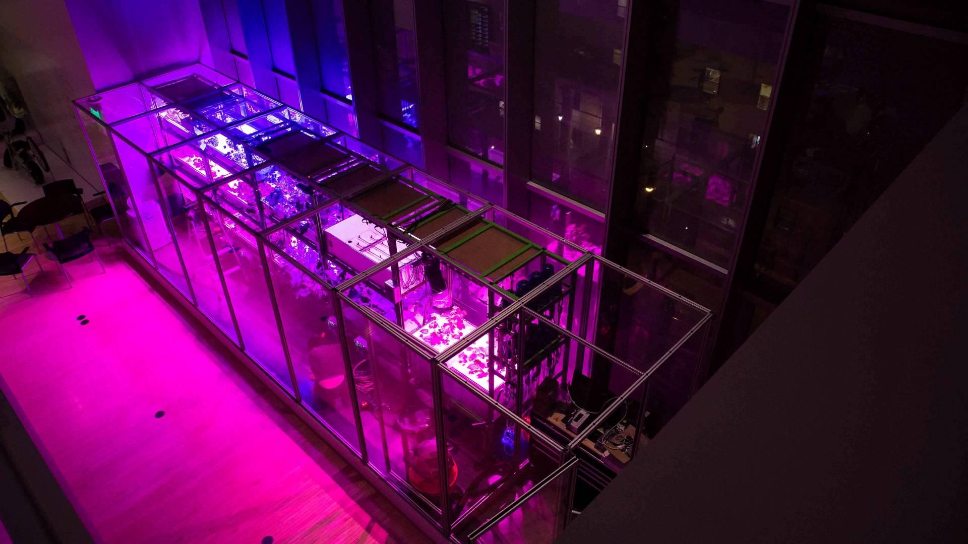 искусственный интеллект позволит получить растения с заданными свойствами