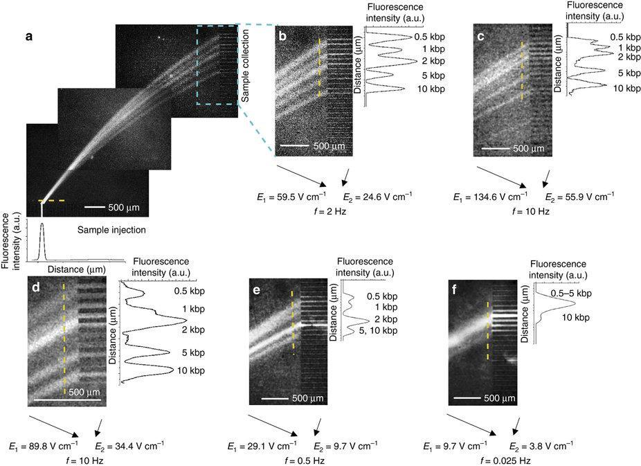 микрофлюидный чип на порядок ускорит разделение фрагментов ДНК