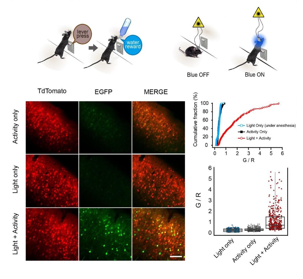 как увидеть поведение на уровне нейронов