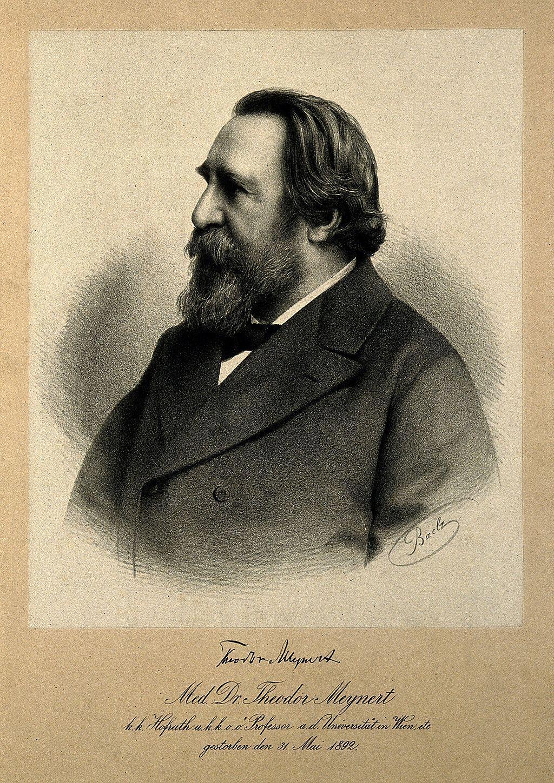 Теодор Мейнерт