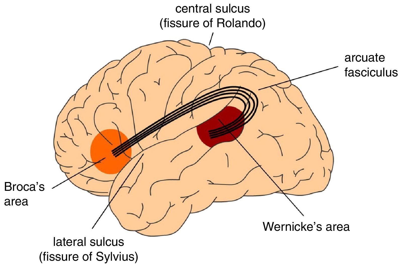 Брока и Вернике мертвы: время переписать нейробиологию речи