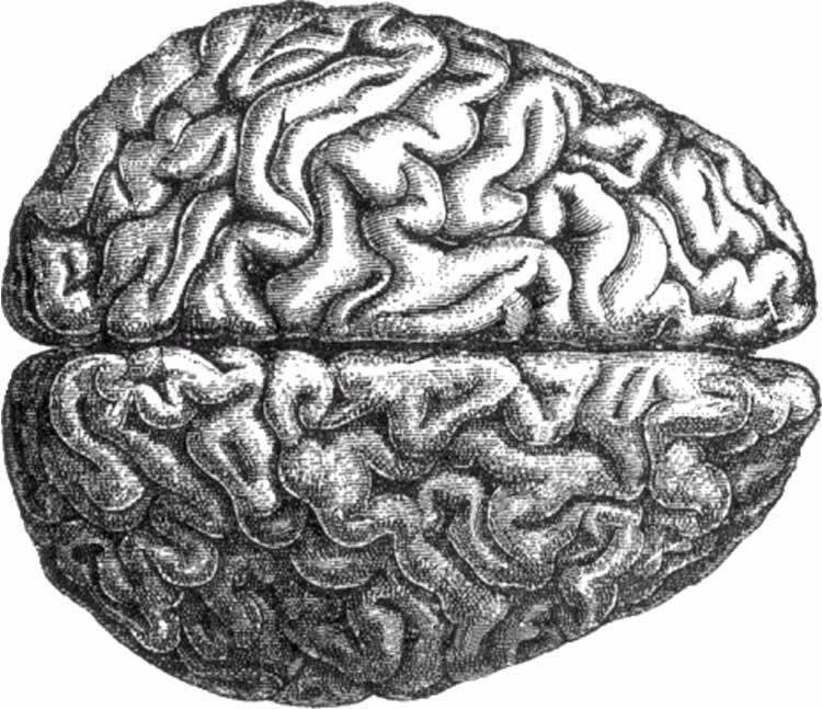 как мозг находит «иголку в стоге сена»