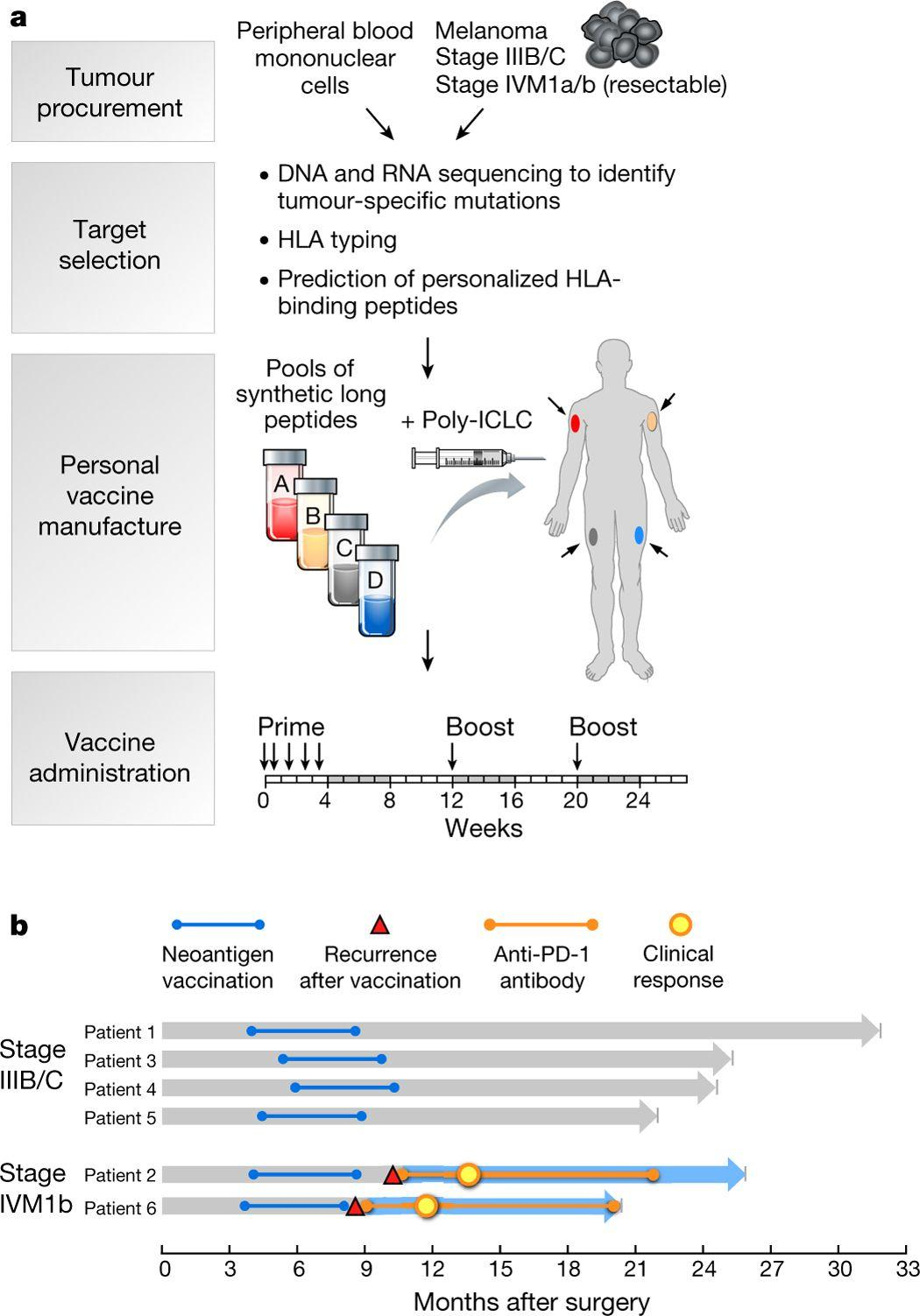 Короткие пептиды и РНК начали побеждать в борьбе иммунитета с раком