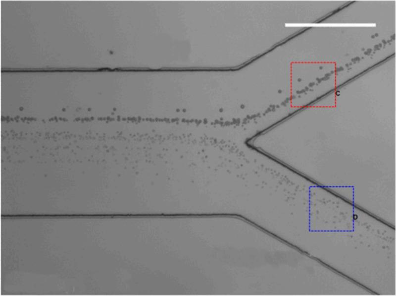создан микрочип для выделения раковых клеток из крови