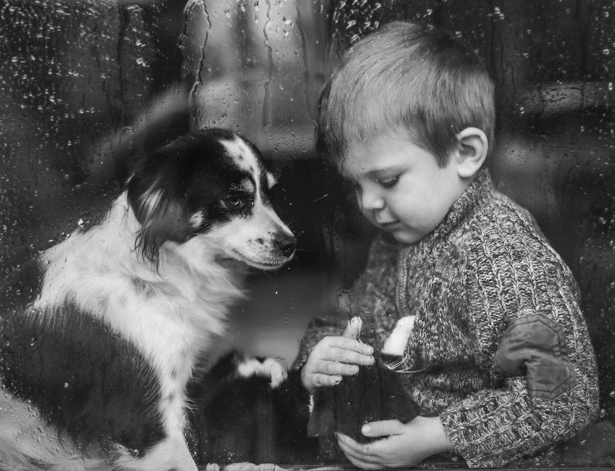 в российских школах могут появиться уроки гуманного обращения с животными