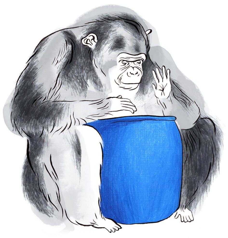 Шимпанзе самостоятельно научился играть на барабане