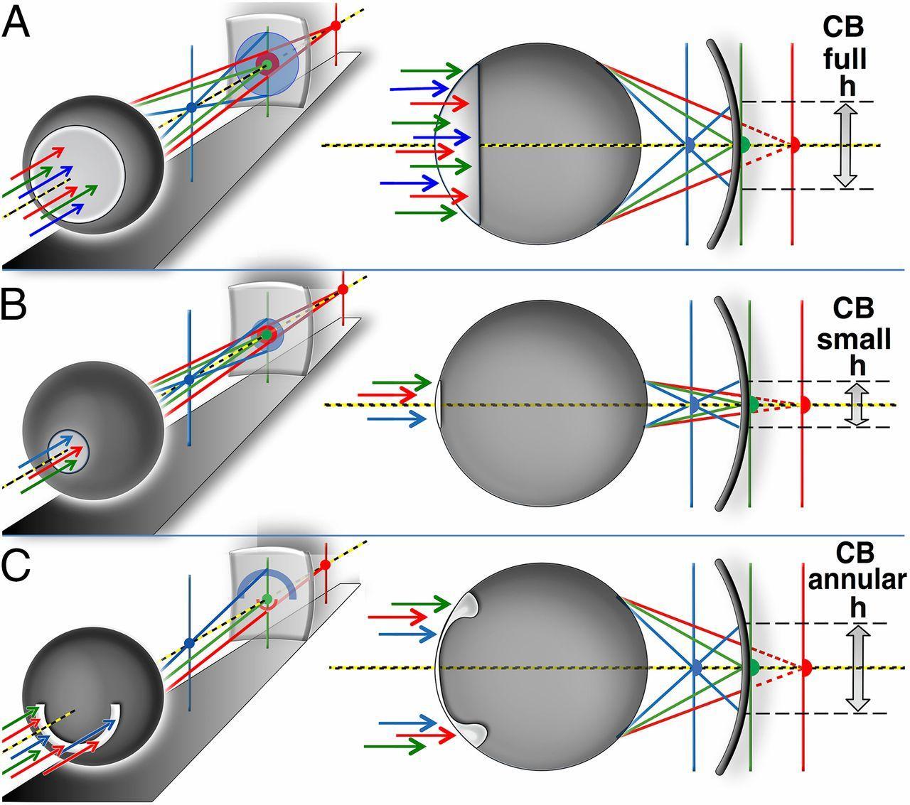 секрет цветного зрения осьминогов и каракатиц оказался связан с формой зрачка