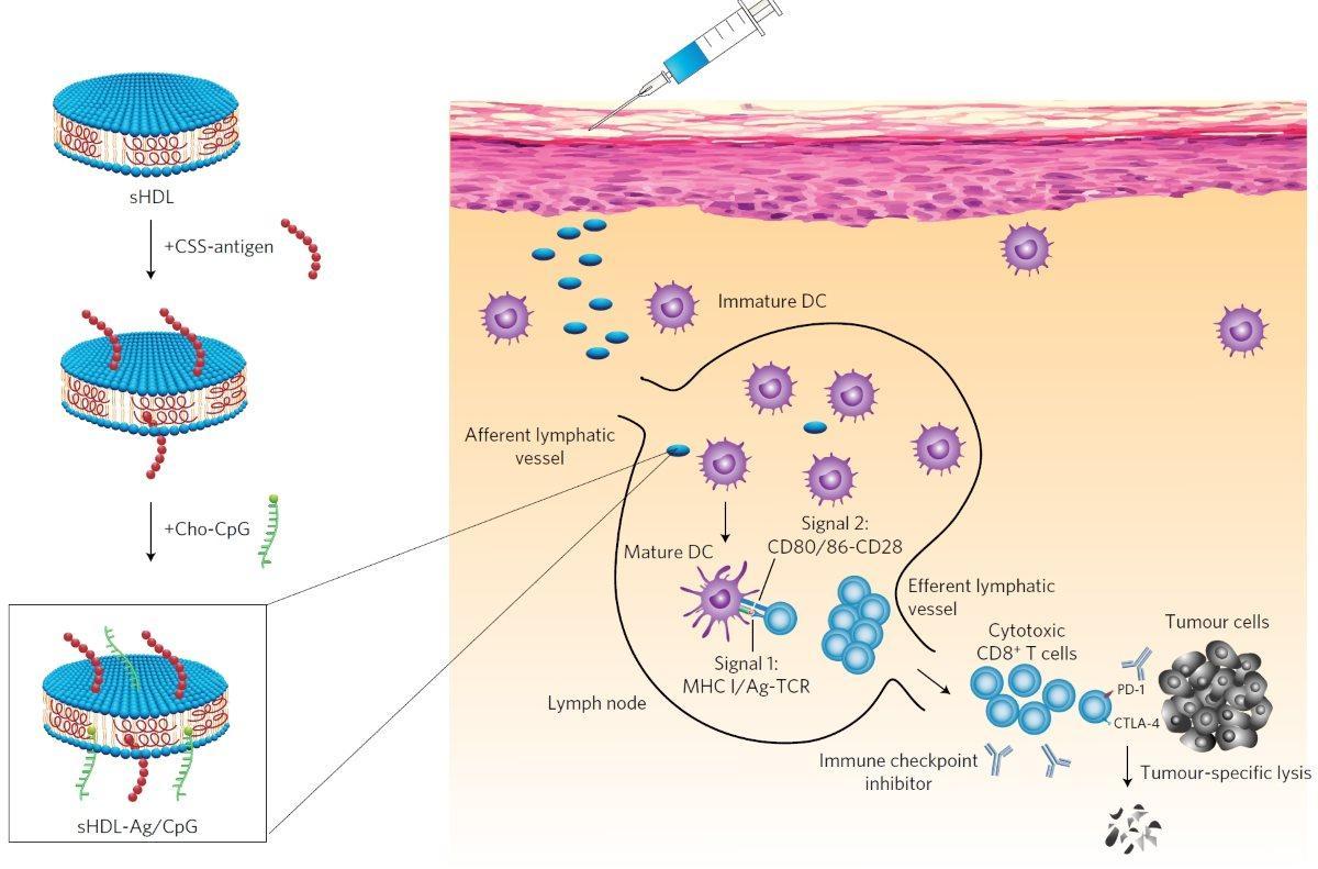 повышен холестерин после тиреоидэктомии