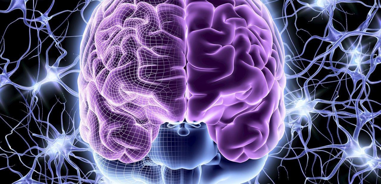 где в мозге происходят «мысленные эксперименты»