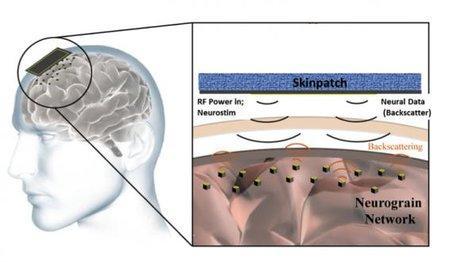 DARPA хочет нейроинтерфейсы на миллион нейронов