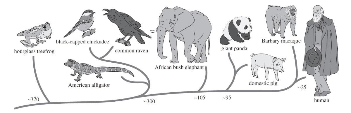 люди оказались способны понимать эмоции в языке животных