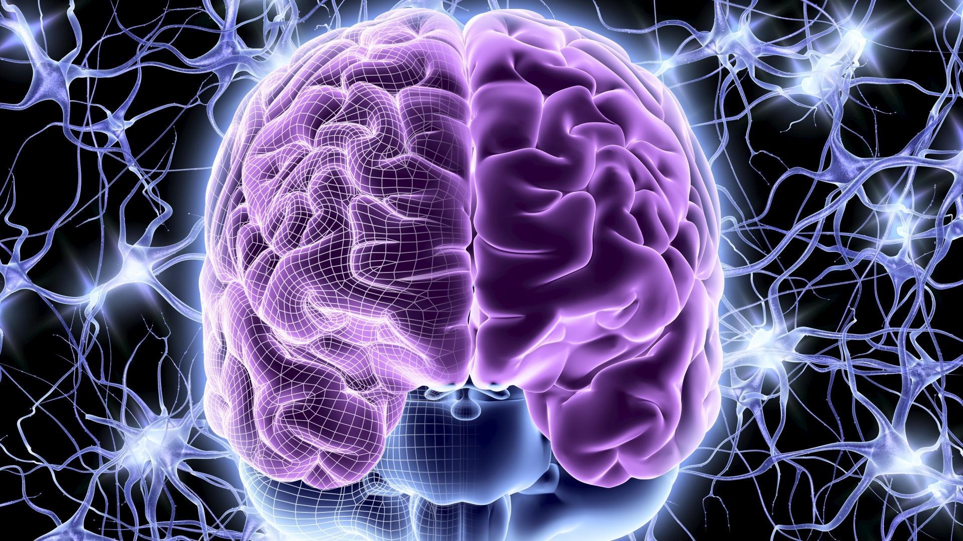 Где в мозге происходят «мысленные эксперименты»?