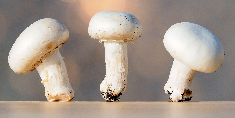 В США поступит в продажу первый CRISPR-гриб
