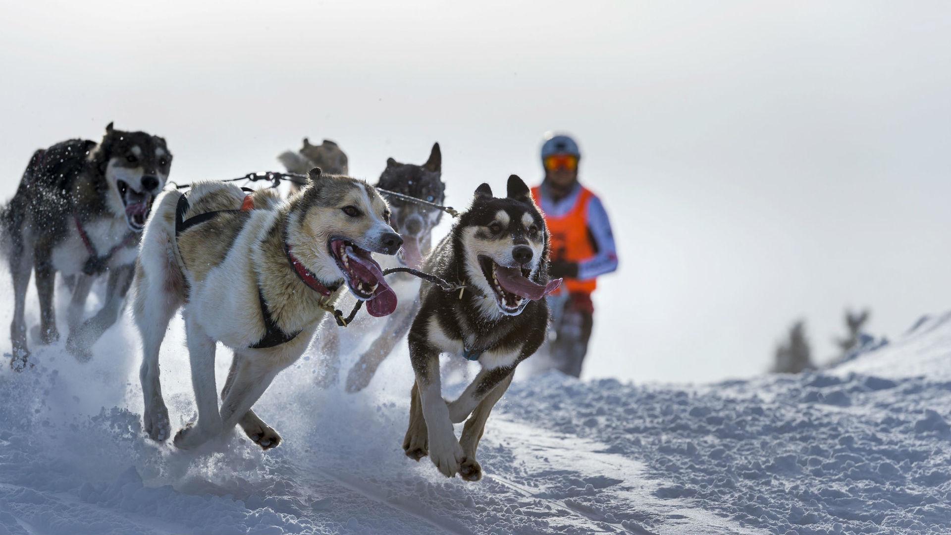Древние геномы подогрели споры об одомашнивании собак