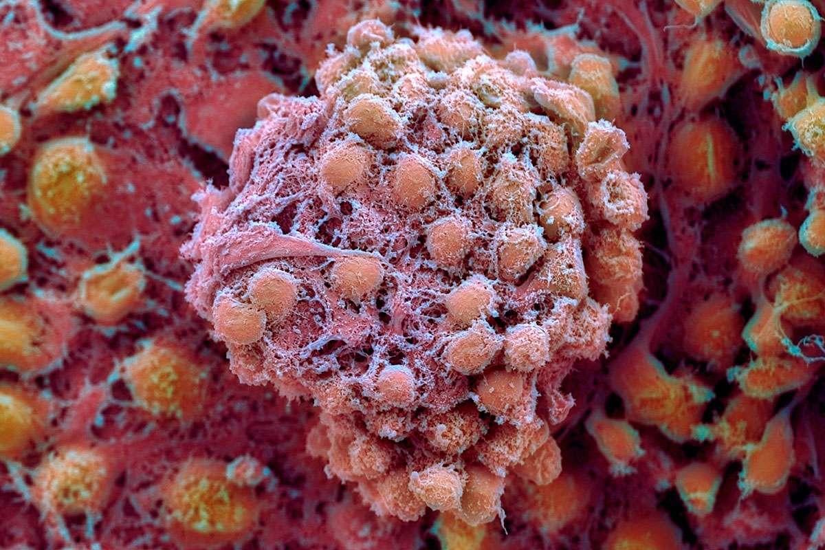 Искусственные и эмбриональные стволовые клетки похожи друг на друга