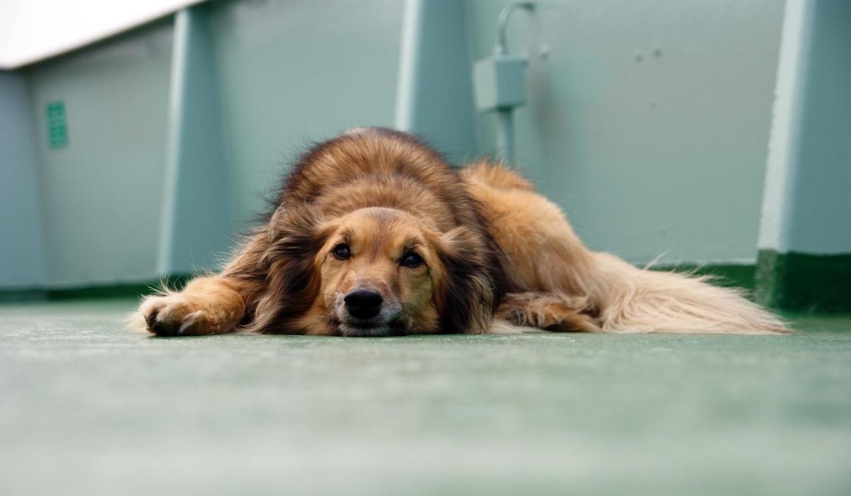 в Дагестане неизвестные разгромили приют для бездомных животных