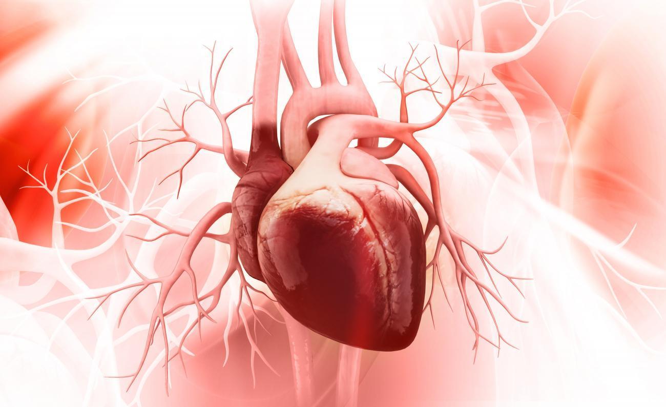 Биологи создали крошечное человеческое сердце на месте крысиного