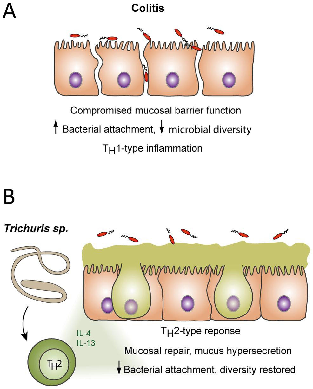 Гельминты защищают нас от болезни Крона