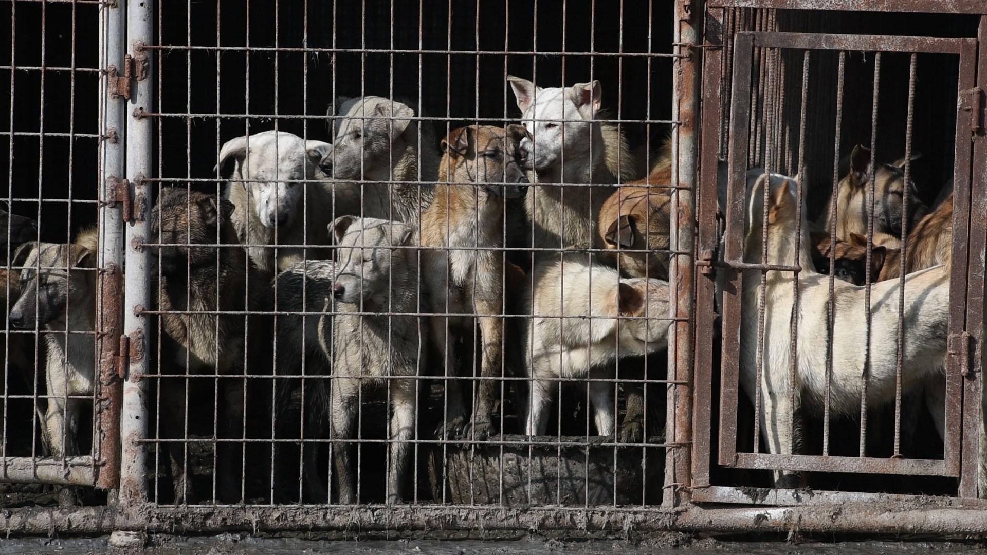 Законопроект о жестоком обращении с животными готовят ко второму чтению