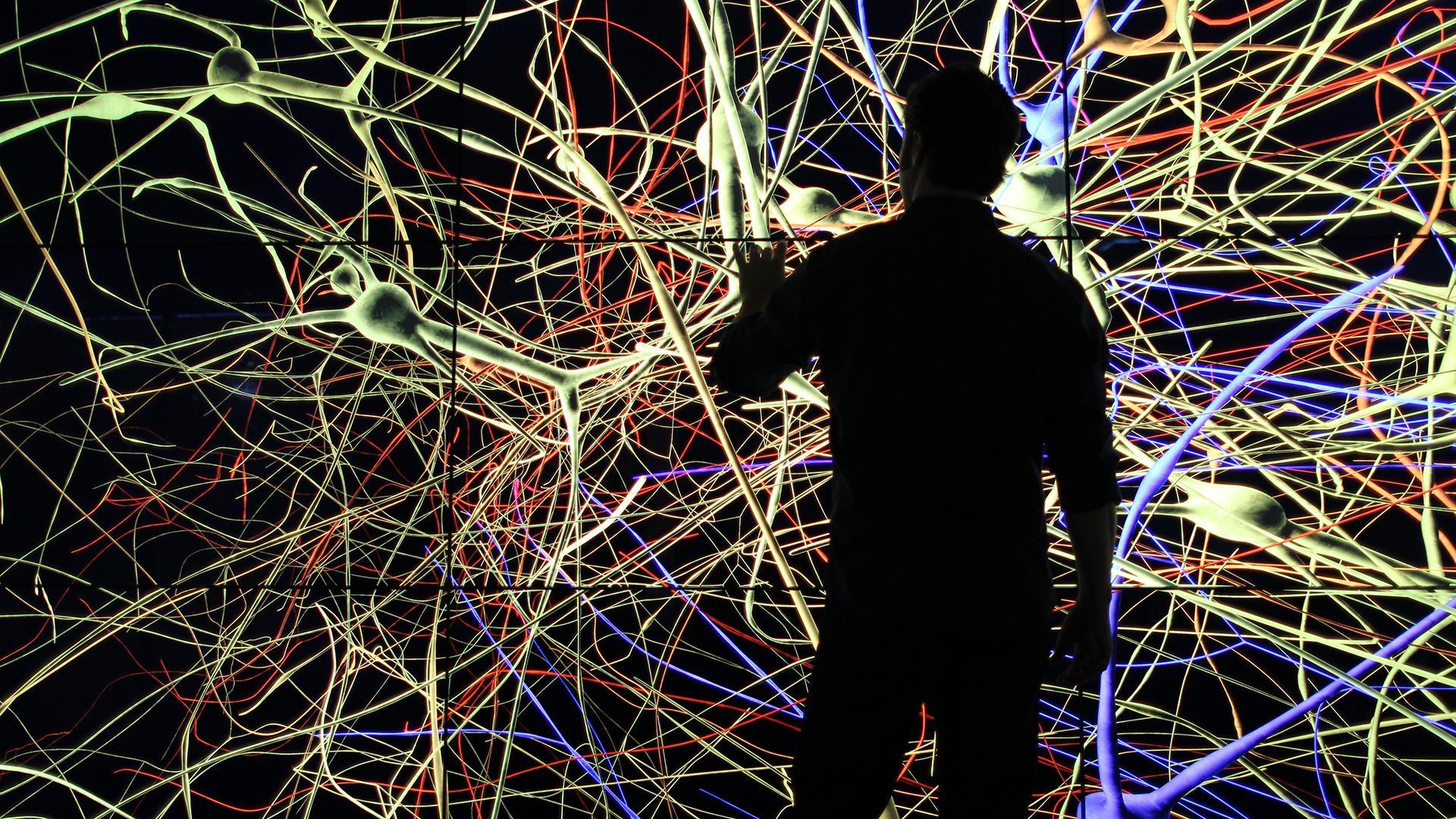 Пять вопросов к нейронаукам от Михаила Лебедева