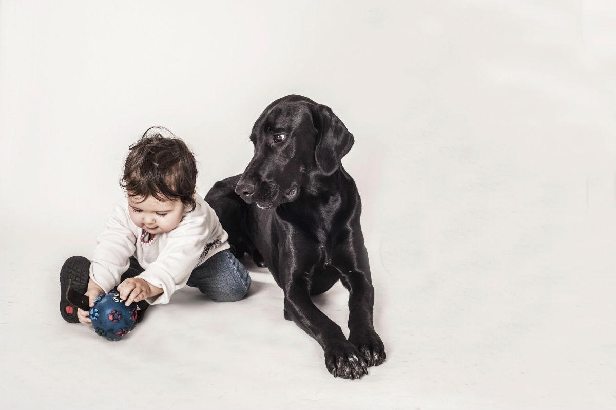 редкое заболевание человека может объяснить дружелюбность собак