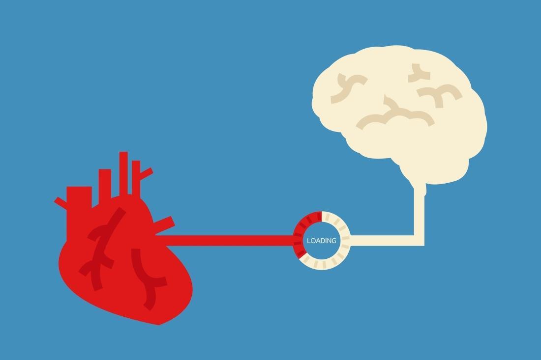 объем мозга в старости напрямую связан со здоровым сердцем в молодости