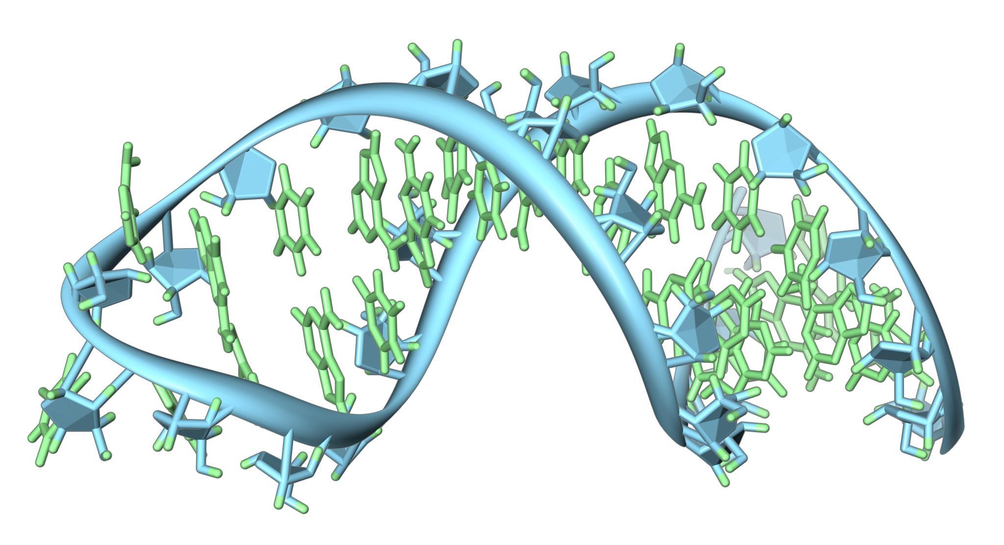 Биологи нашли принципиально новый механизм клеточной борьбы с вирусами