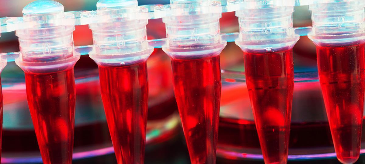 ученые подобрались к секрету создания неисчерпаемых донорских клеток крови