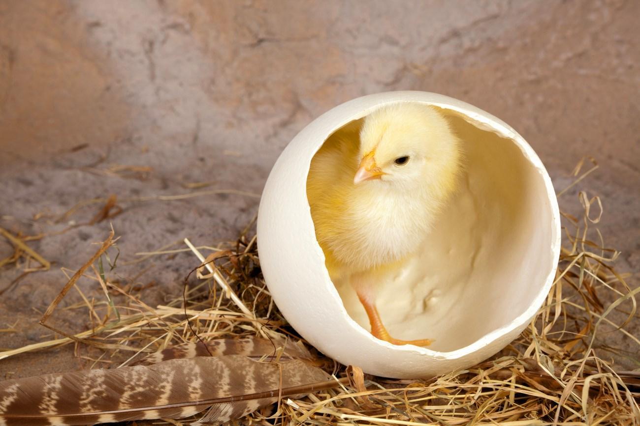 птичий грипп заражает людей