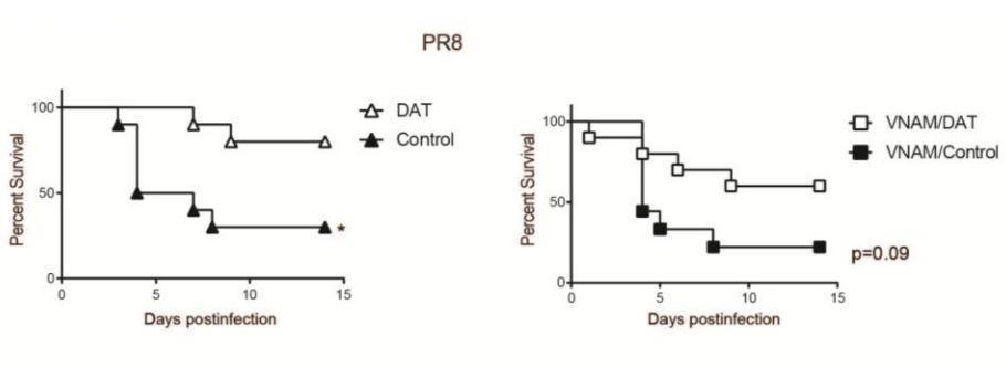 кишечные микробы превратили флавоноиды в противовирусный препарат