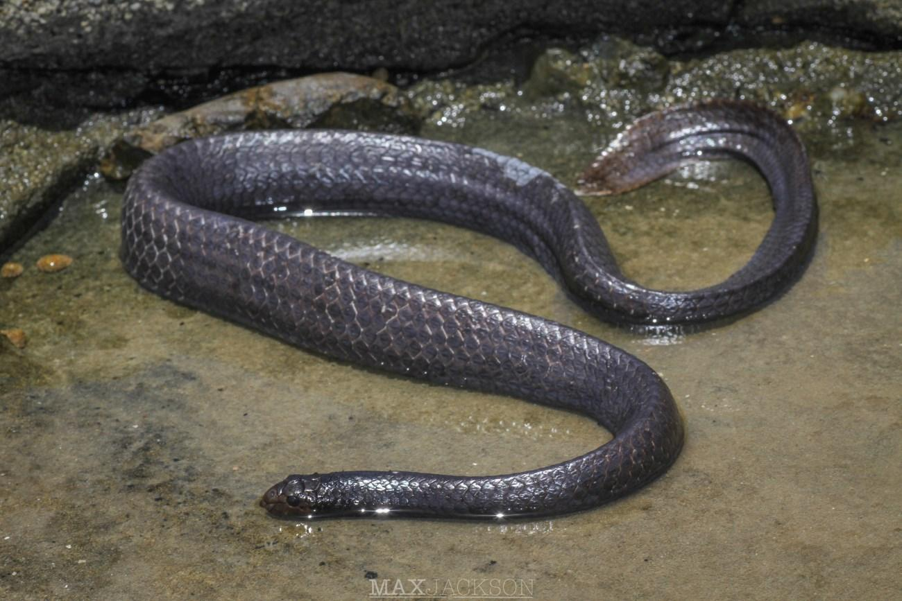 Морские змеи потемнели от грязи