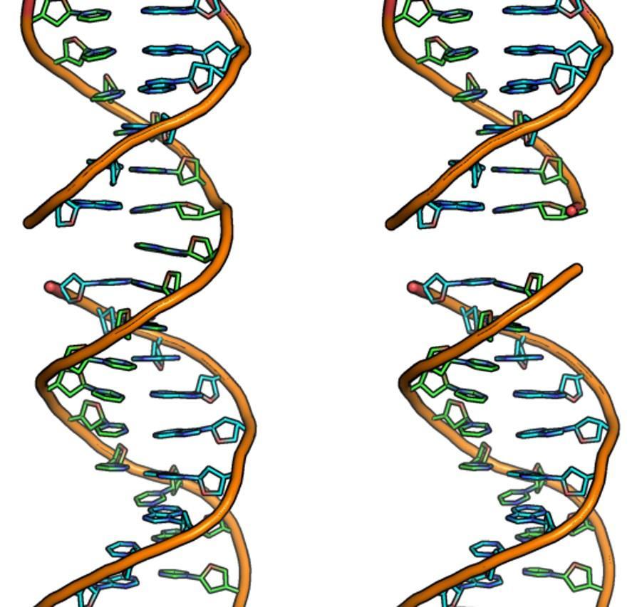 стволовые клетки сопротивляются радиации