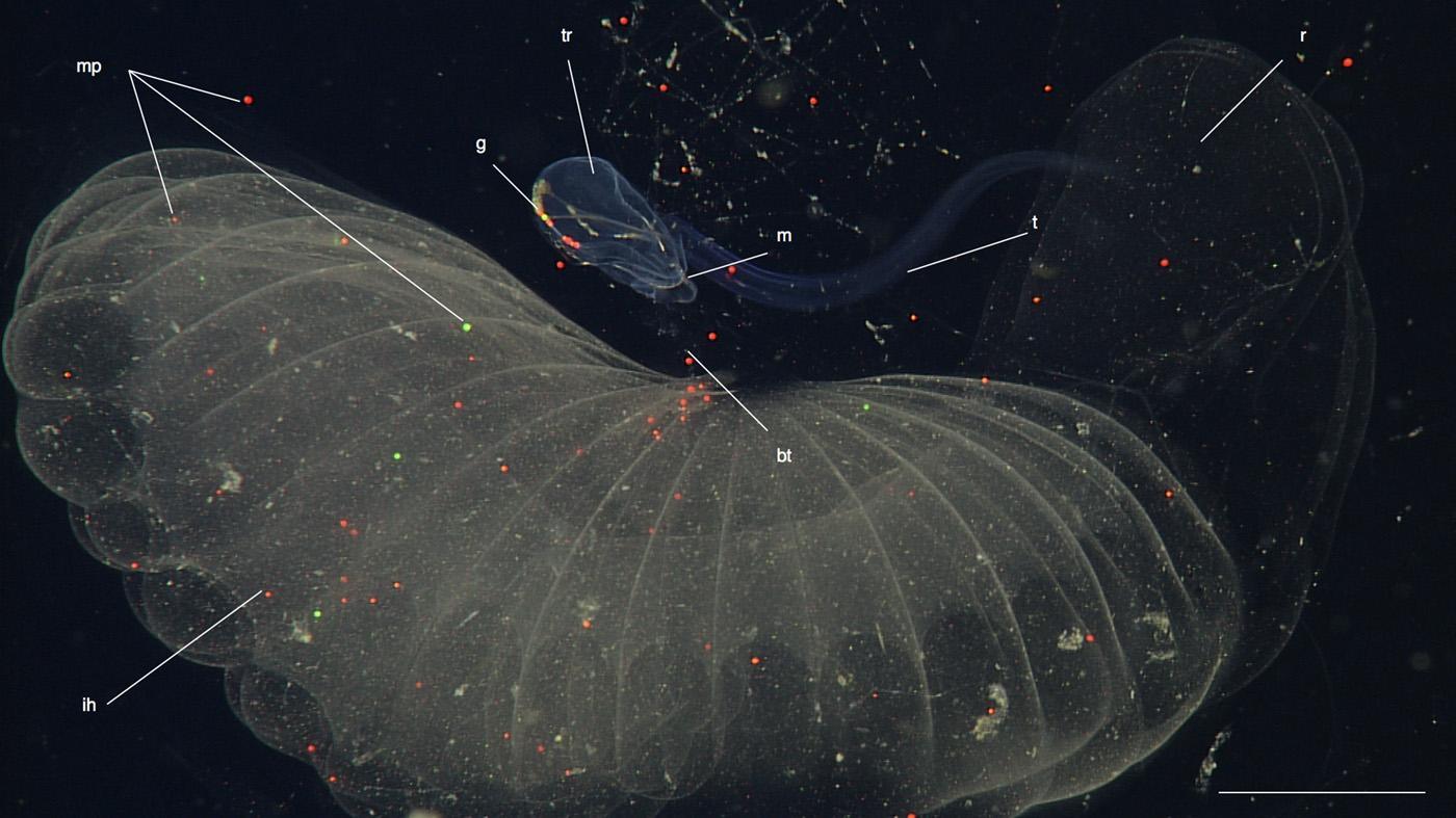 почему морской пластик падает на дно
