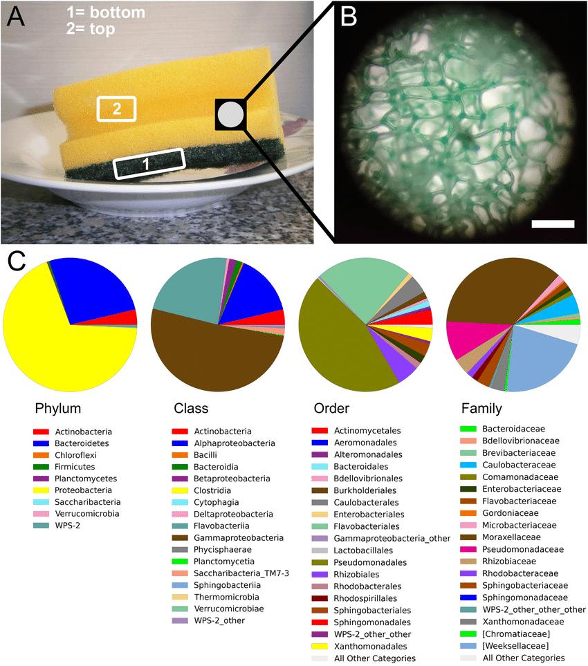 Губки для мытья посуды оказались жилищем для умеренно патогенных бактерий