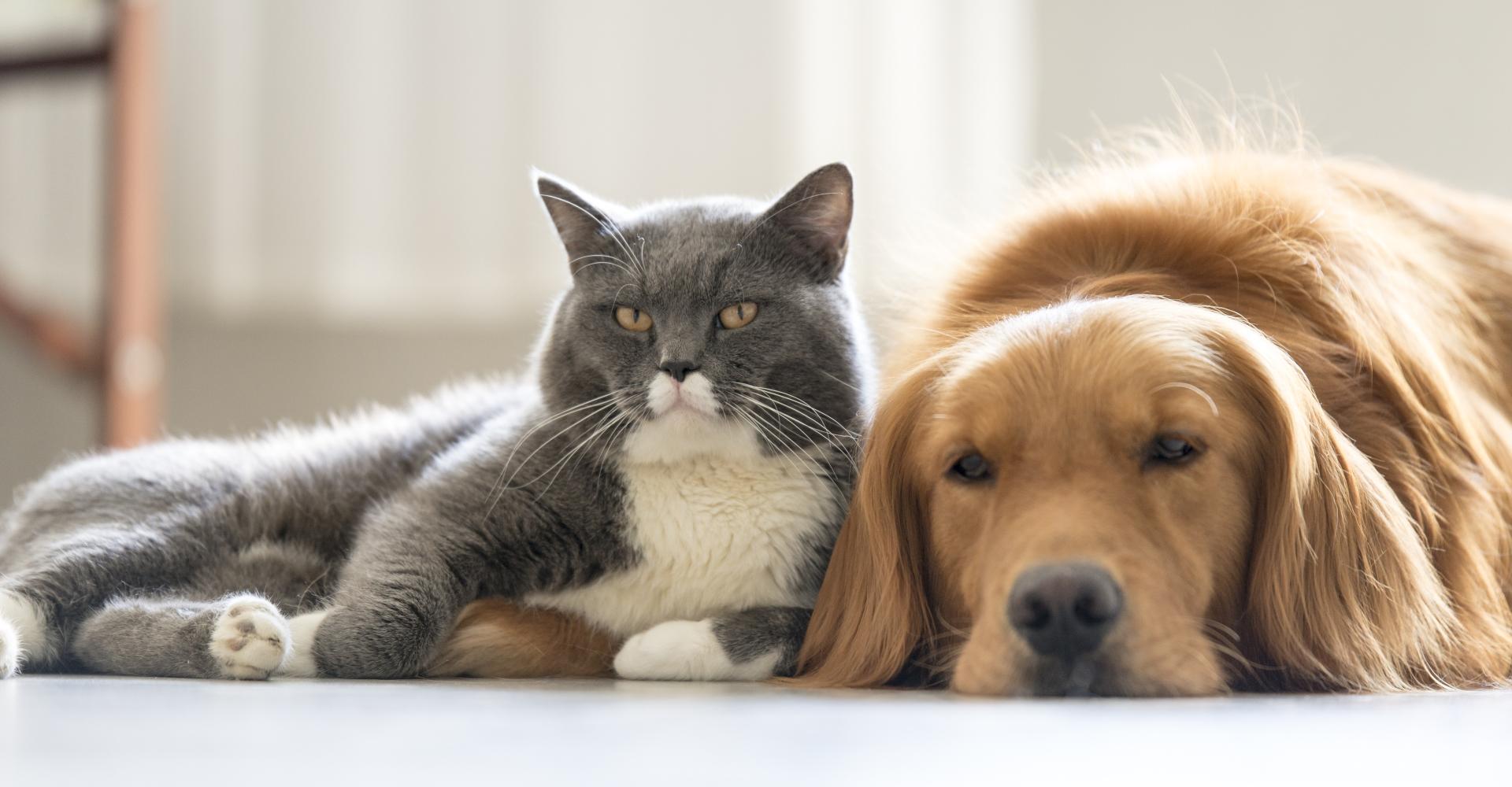 Кошки против собак: ученые спорят, кто умнее