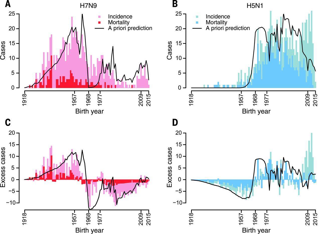 Риск смерти от птичьего гриппа предсказали по году рождения