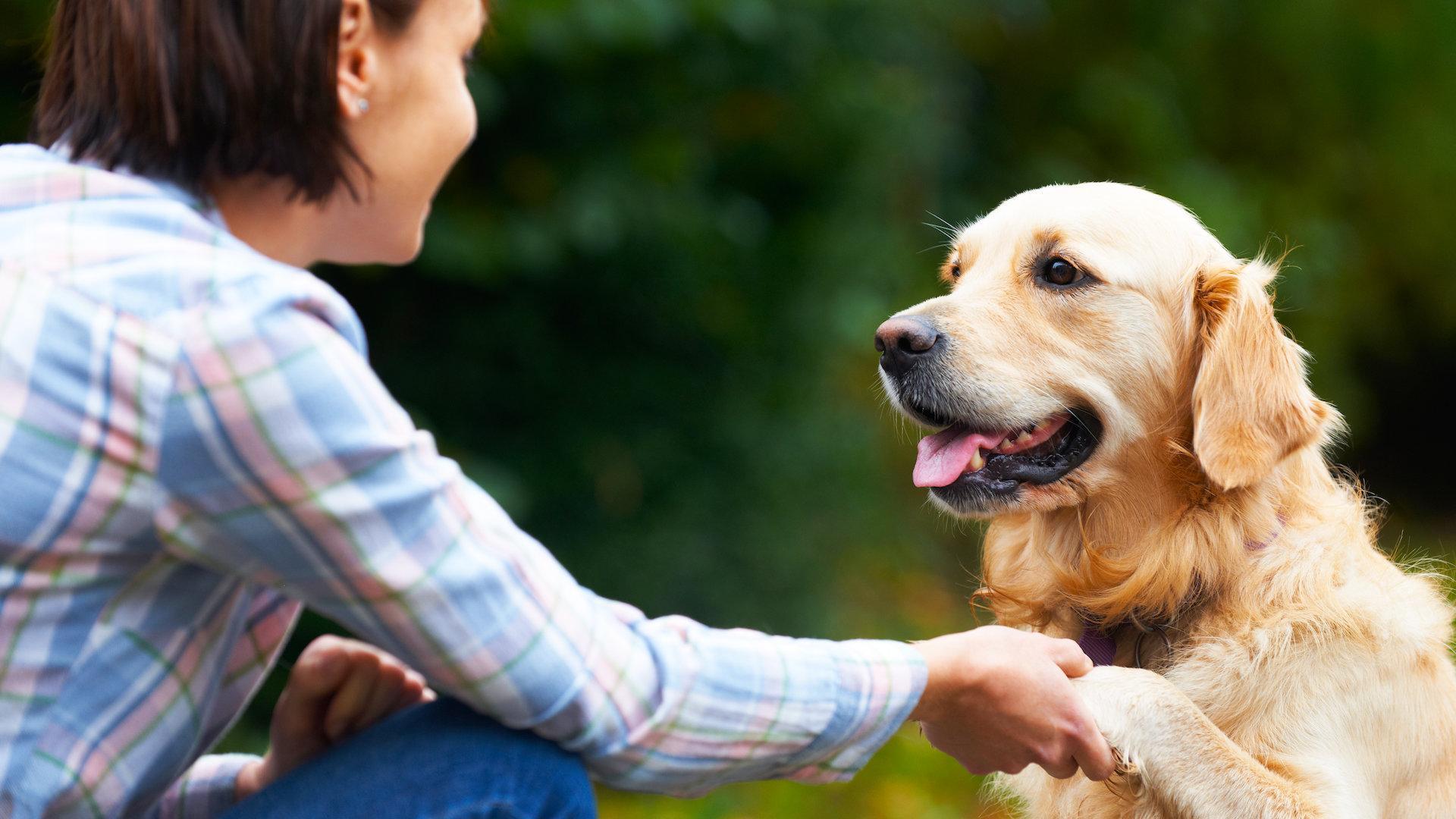 Очень хотели подружиться: человек приручал собак дважды