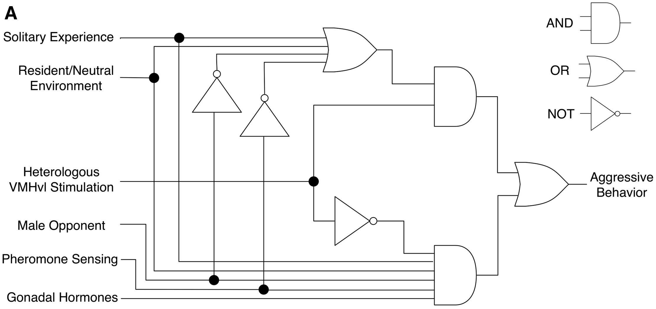 Совместное проживание снизило агрессивность мышей