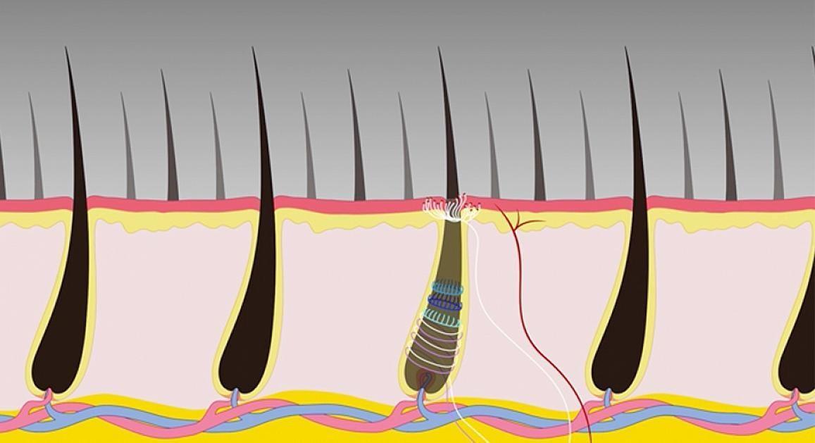 Клетки боли для дёргания за волосы