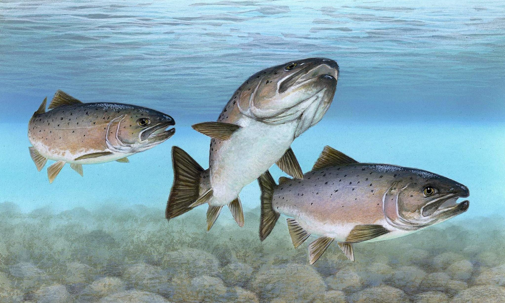 В геноме лосося обнаружили следы неизвестного ранее вируса