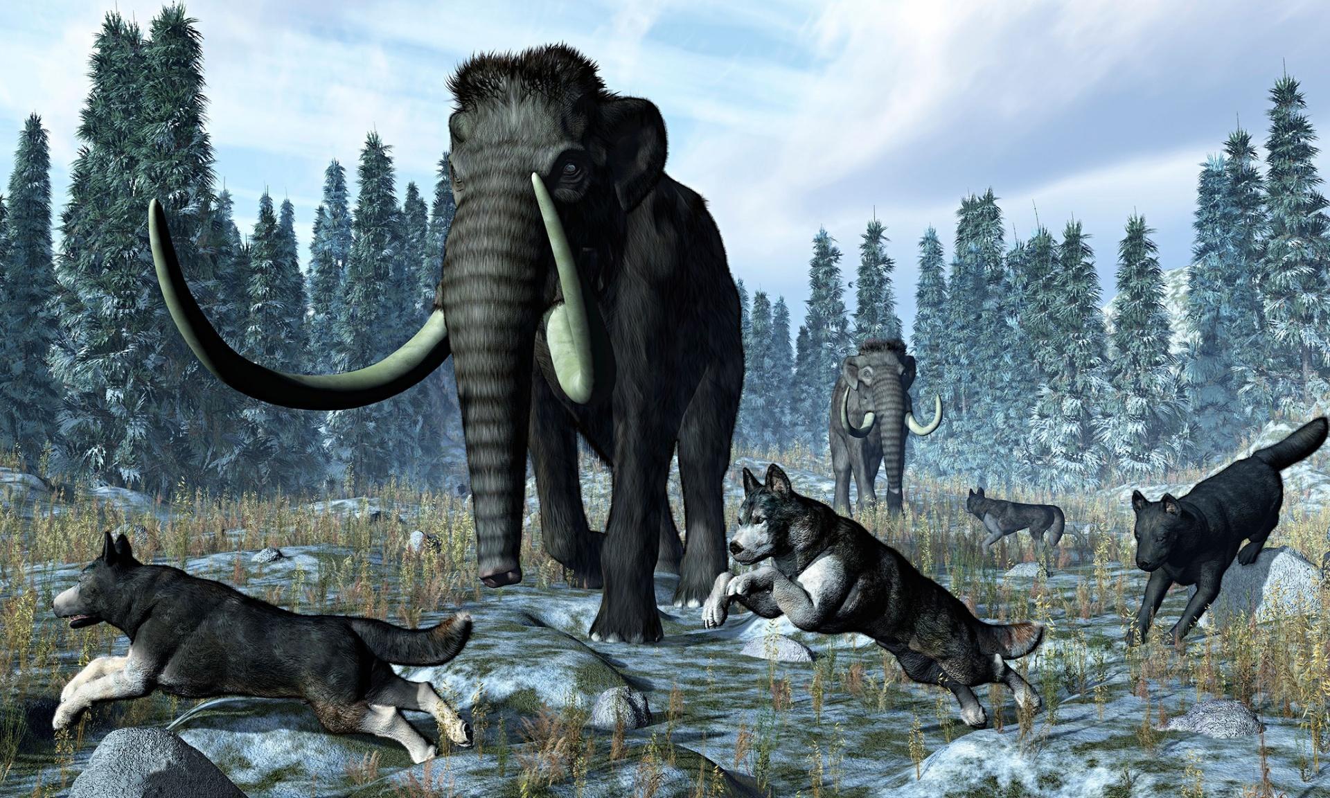 Собаки помогли древним людям превзойти неандертальцев