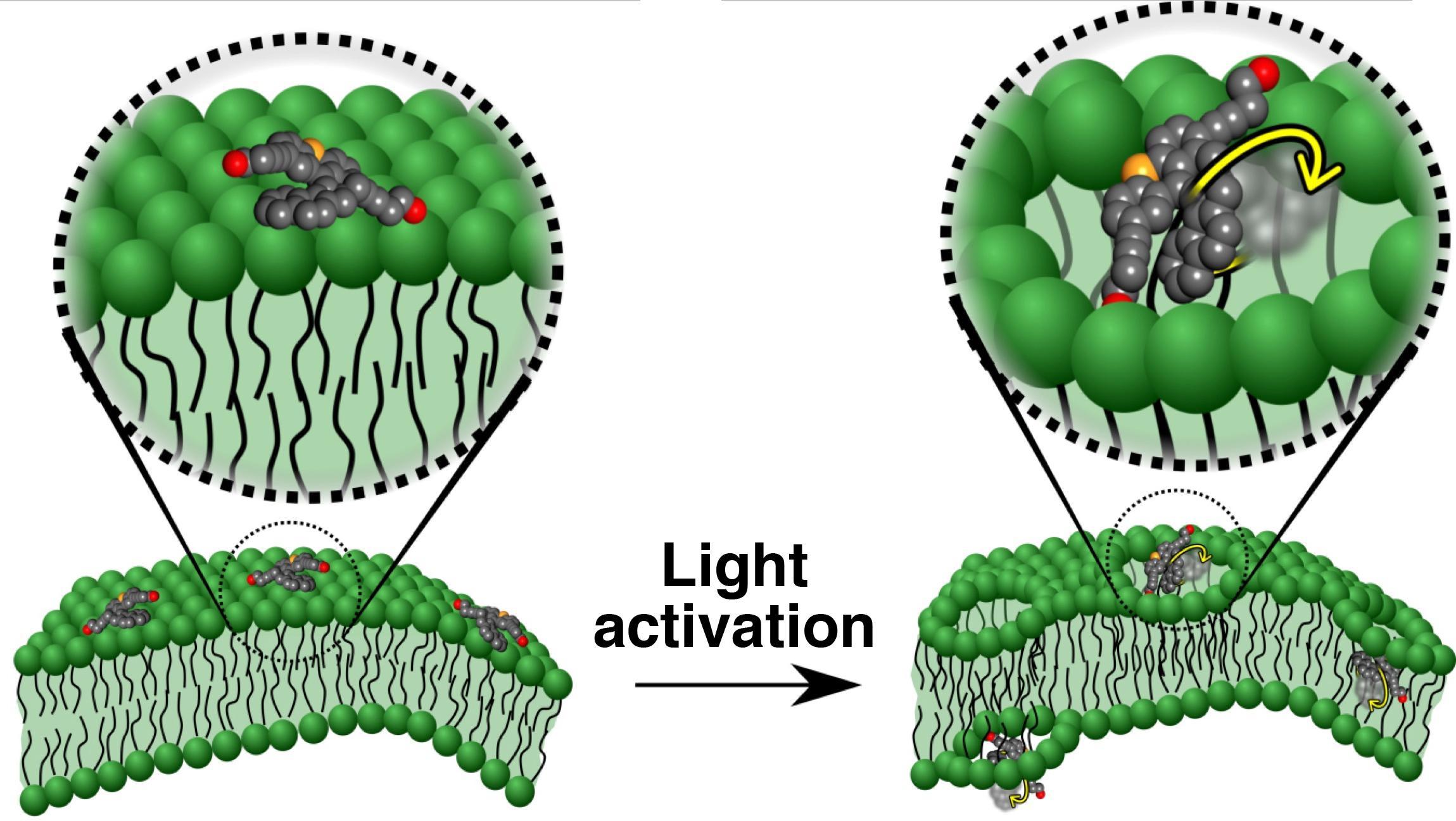 Раковые клетки просверлили «нанодрелью»