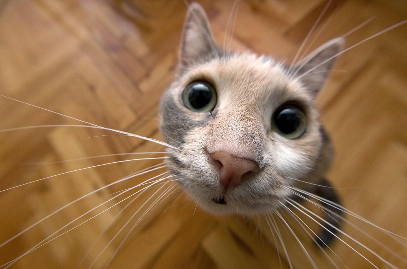 Открытки добрым, смешные картинки кошек
