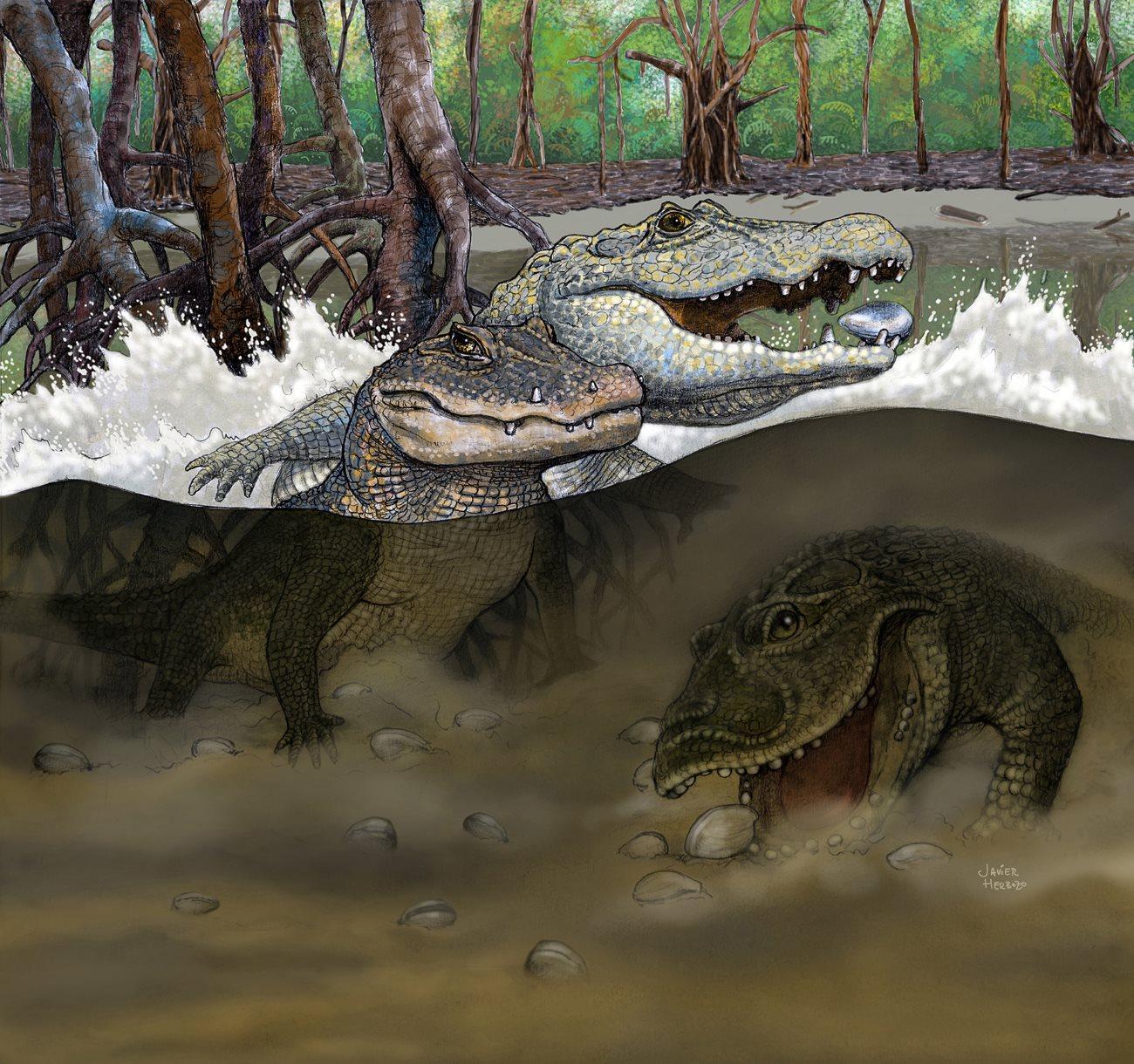 В Перу обнаружено обширное кладбище древнейших крокодилов