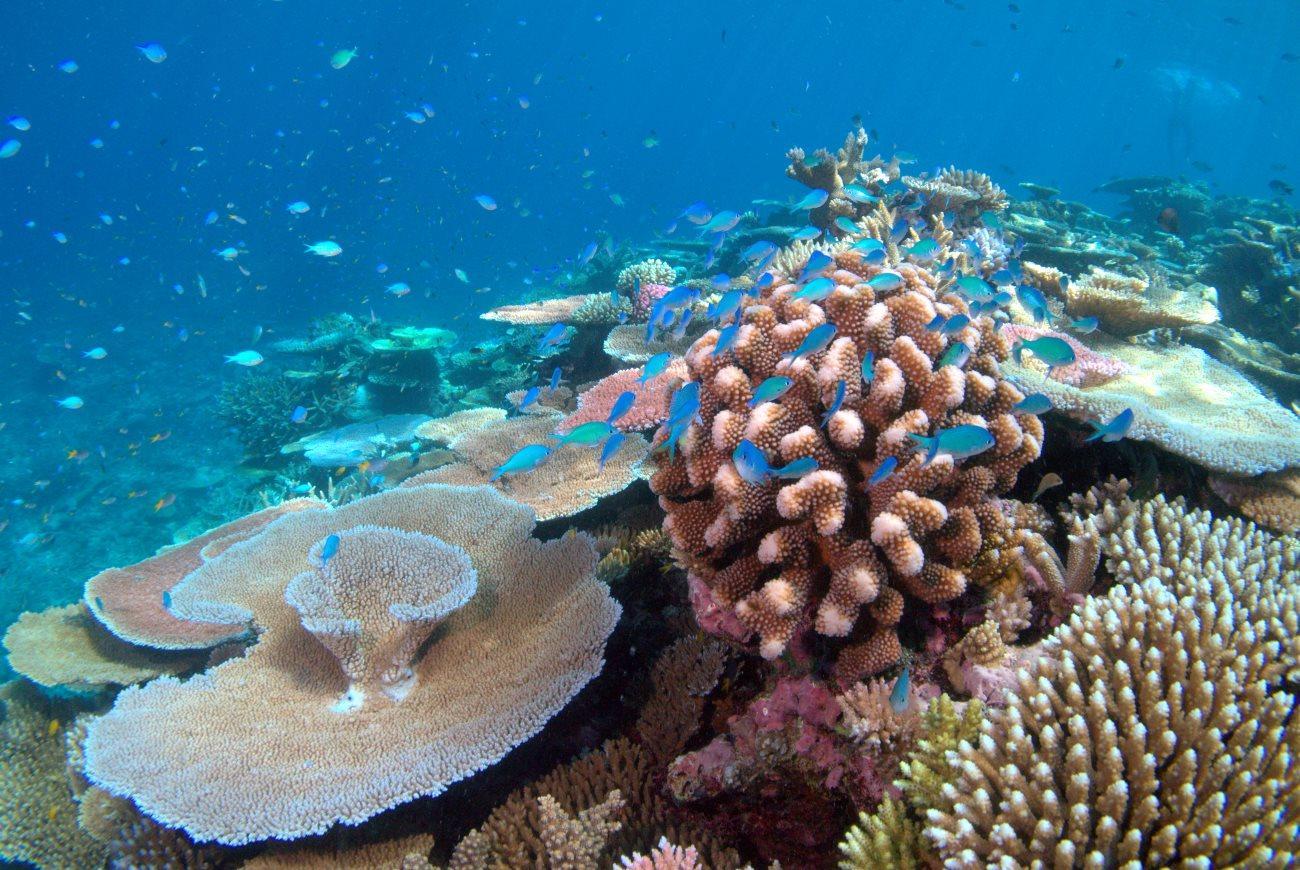 вымирание кораллов началось более ста лет назад